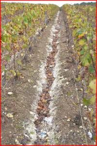 Travail du sol dans les vignes en Champagne, Marne, 51