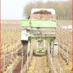 Epandage d'écorces dans les vignes Marne