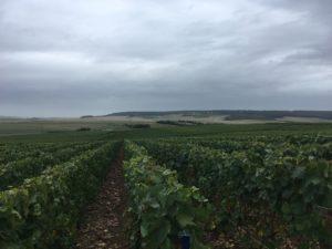 Travaux viticoles manuels
