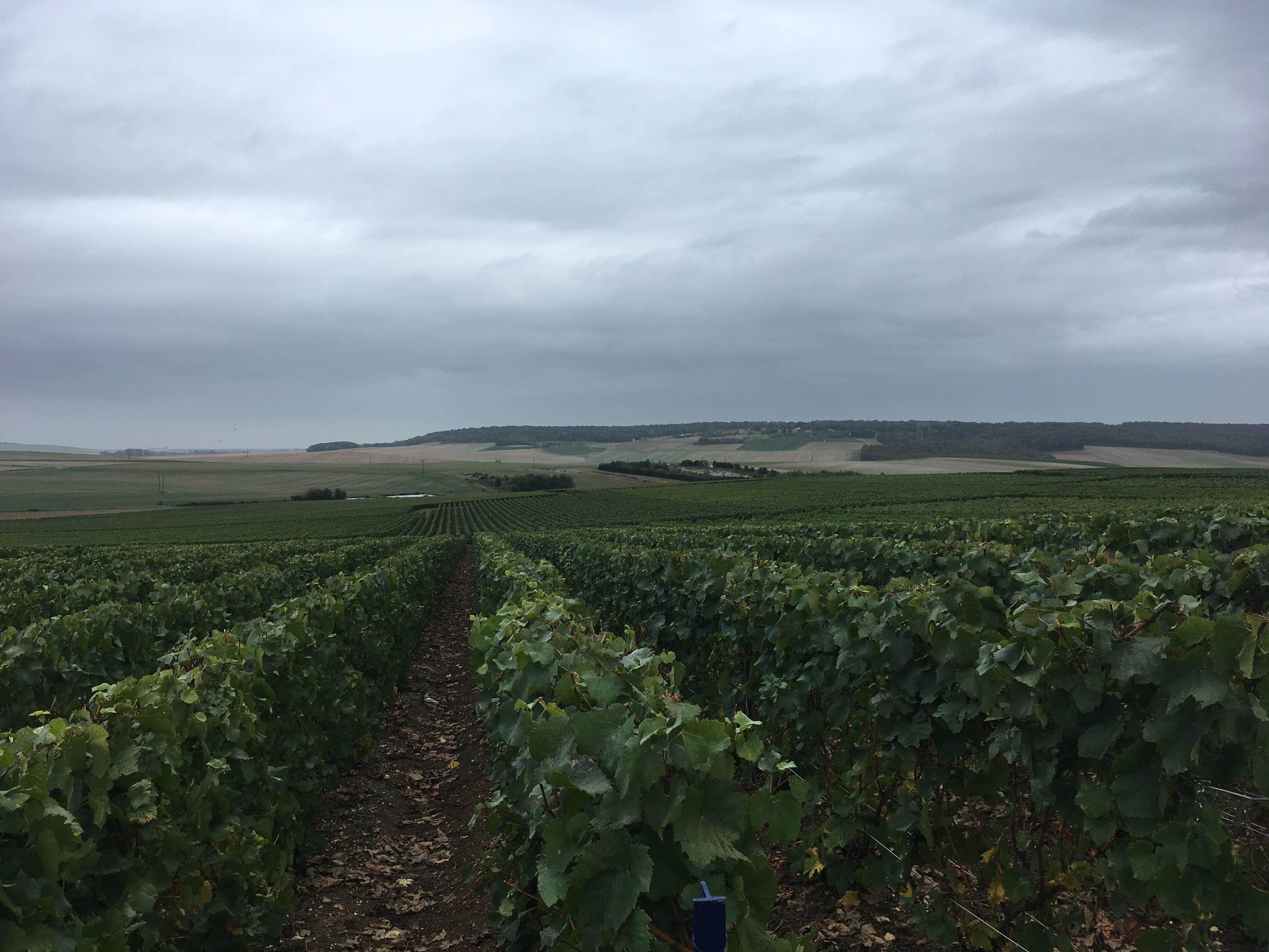 Travaux viticoles manuels, Sarl Meulot, Fèrebrianges, Marne, 51