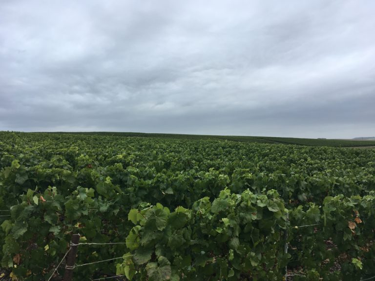 Fertilisation des vignes.