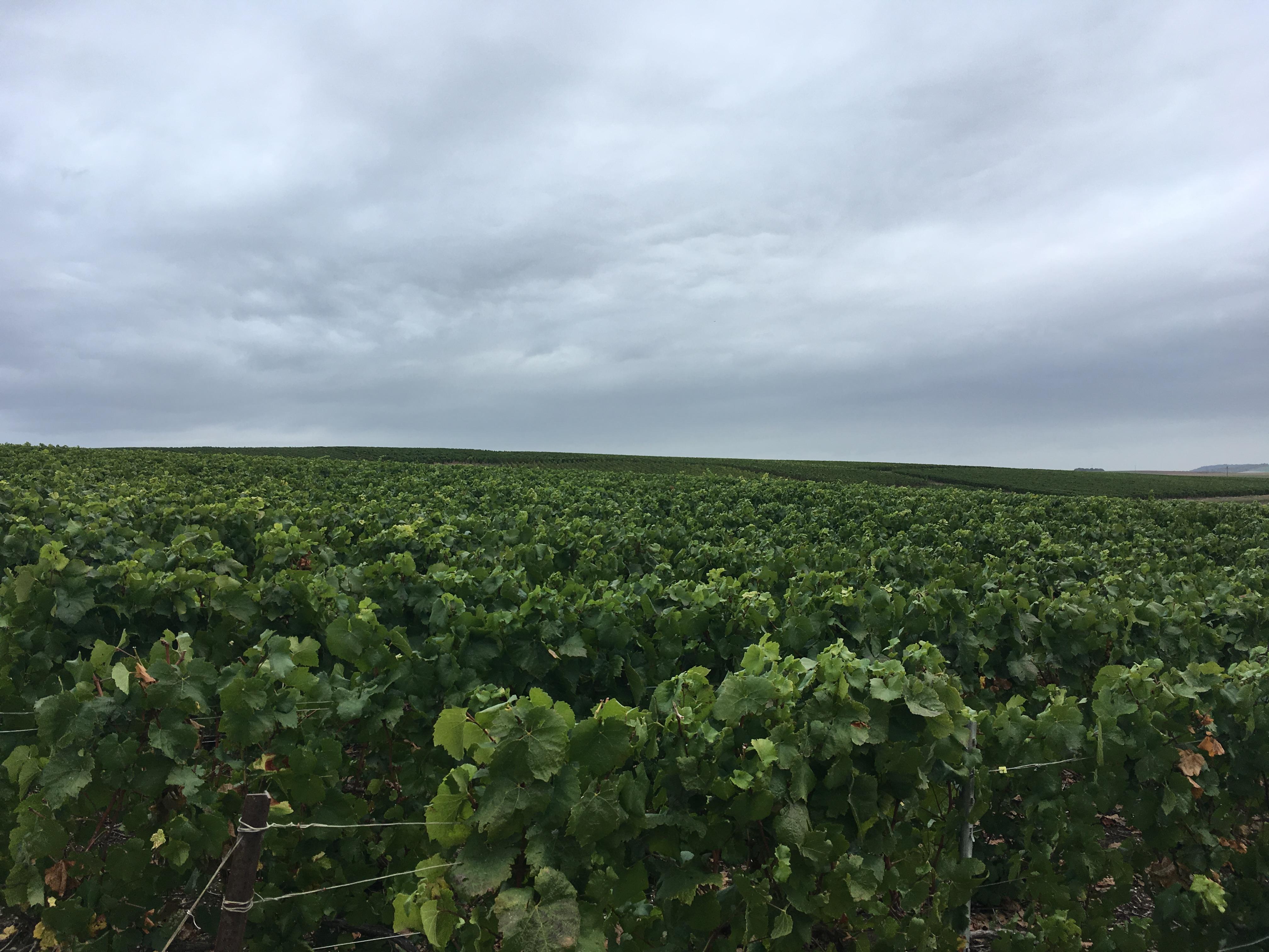 Fertilisation des vignes, prestataire Sarl Meulot à Fèrebrianges, Marne, 51