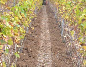 Travail du sol, l'entretien des vignes.