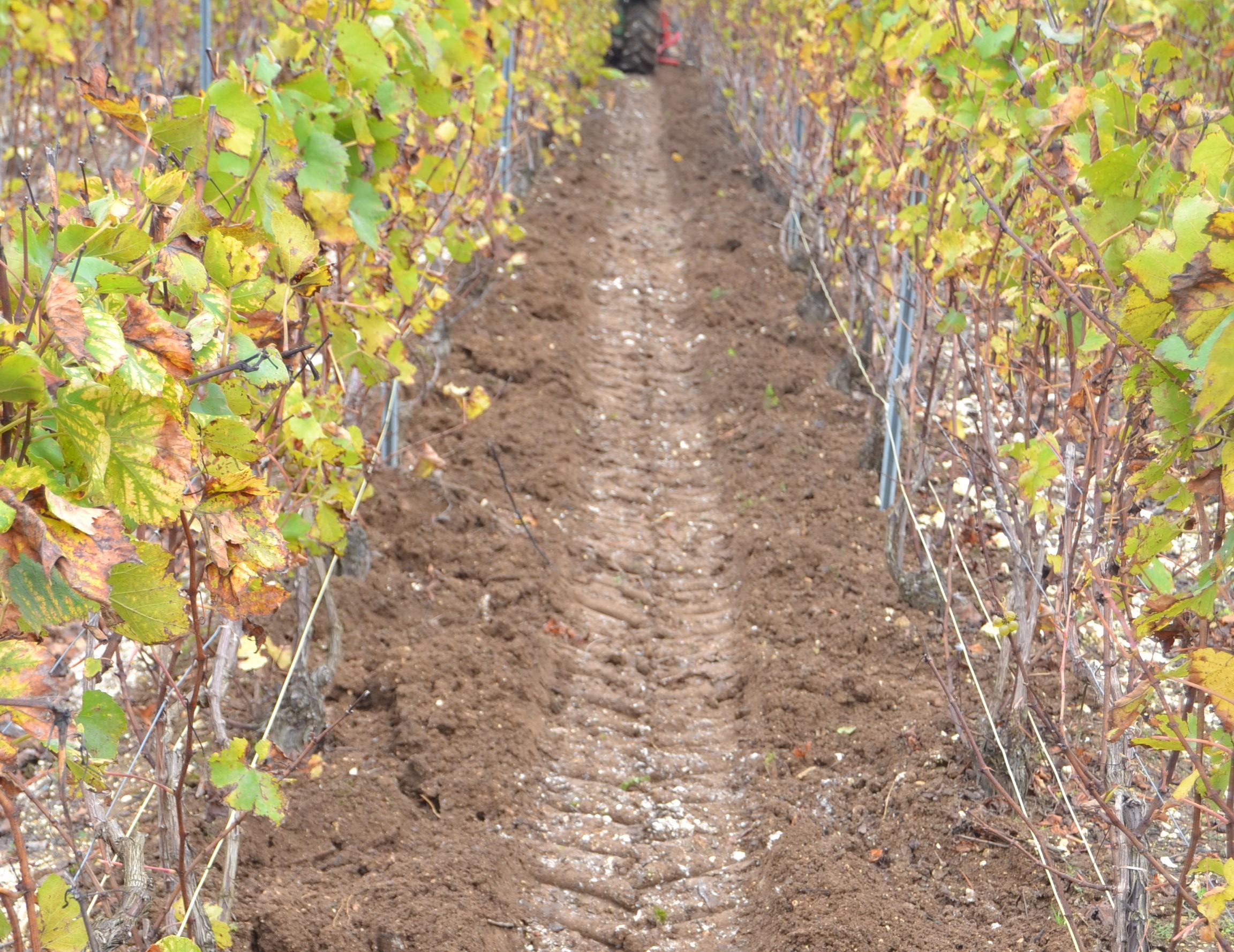 Travail du sol, entretien des vignes, Meulot à Fèrebriange, Marne, 51